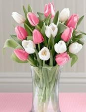 8枝粉色郁金香,8枝白色郁金香,搭配而成,玻璃花瓶