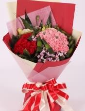 精心挑选66支康乃馨,石竹梅,巴西木叶,桔梗点缀,美丽迷人