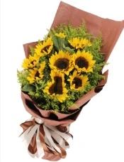 9枝精选向日葵,黄莺点缀。