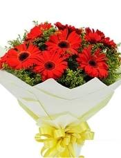 红色太阳花(即扶郎)16枝,黄莺适量搭配。
