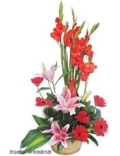 多头粉香水百合2枝,红剑兰6枝,红扶郎9枝,配桅子叶、巴西叶、龟背叶适量搭配