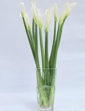 9枝白色马蹄莲,精致花瓶插花