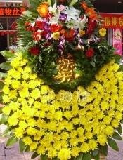 150枝菊花,百合扶郎散尾葵点缀。