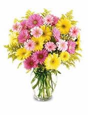 12枝黄色太阳花、12枝粉色太阳花和12枝桃红色太阳花,黄英点缀