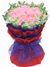 33枝粉色康乃馨,高山积雪围边