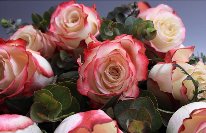 19朵玫瑰花代表什么意思