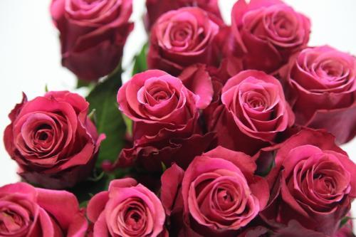 16朵玫瑰花的花语