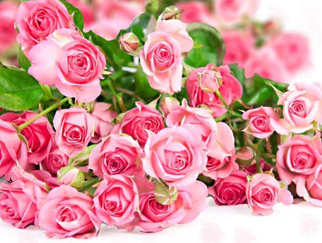 30朵玫瑰花代表什么意思