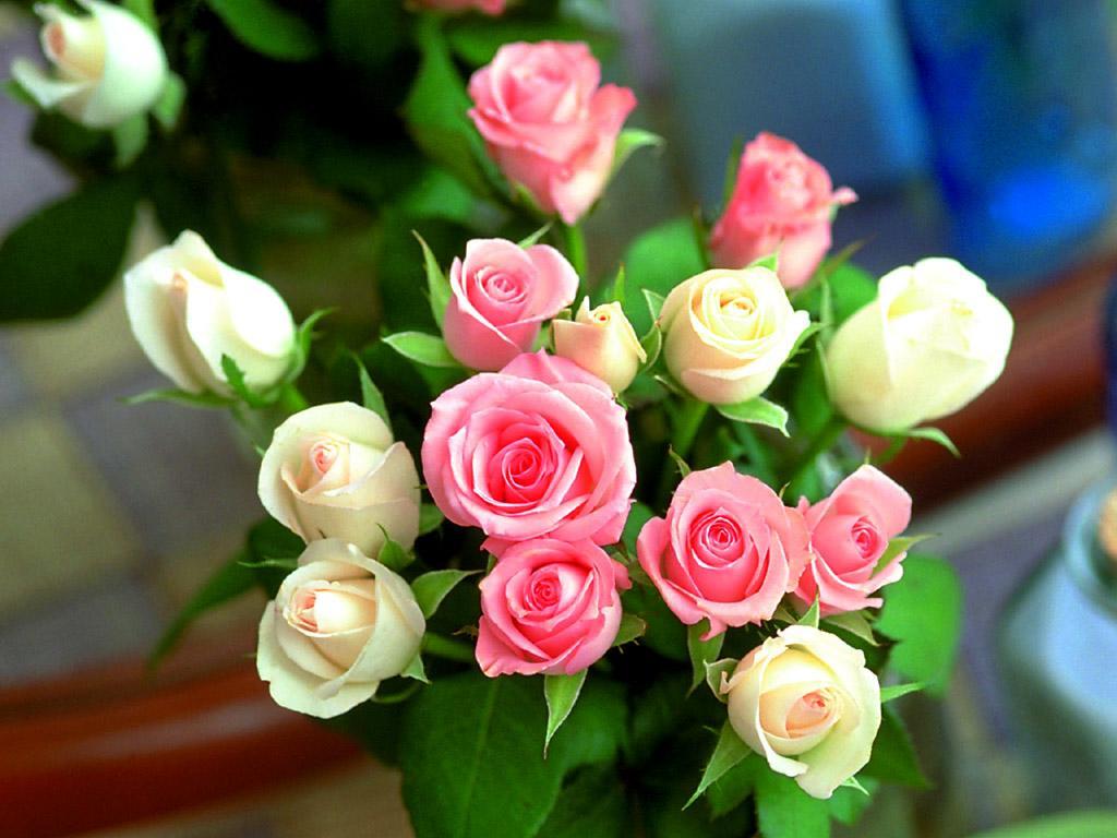 十三朵玫瑰花语