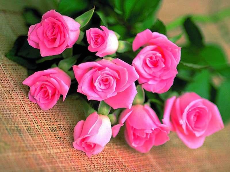 十三朵玫瑰花代表什么意思