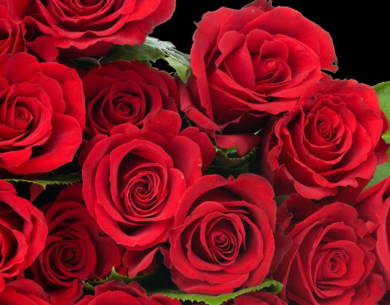 送女朋友多少朵玫瑰花好