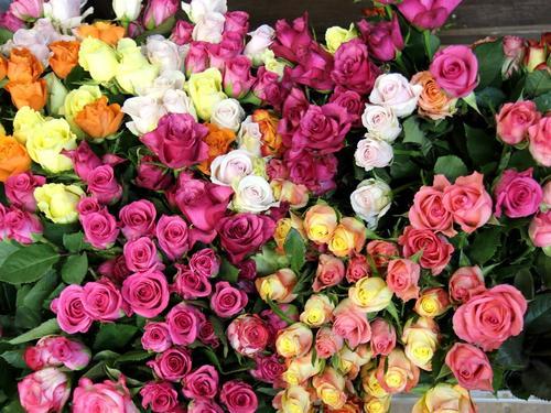 不同颜色玫瑰花语是什么