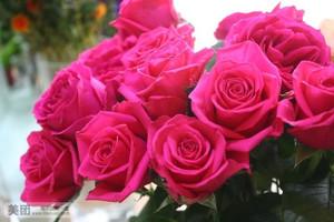 玫红色玫瑰代表什么意思