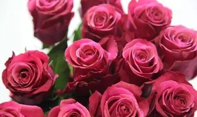 46朵玫瑰花代表什么意思