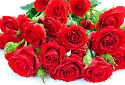 41朵玫瑰花的花语