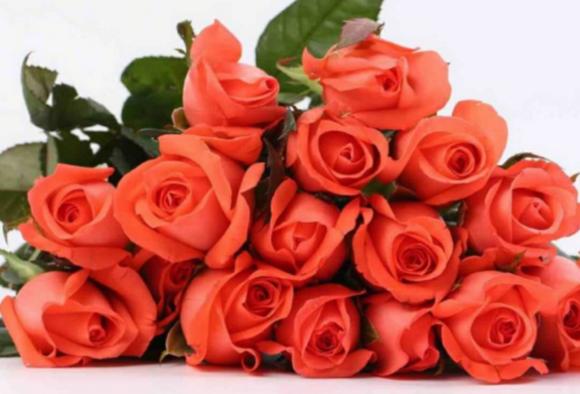 41朵玫瑰花代表什么意思