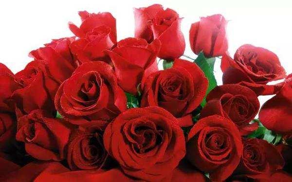 38朵玫瑰花的花语