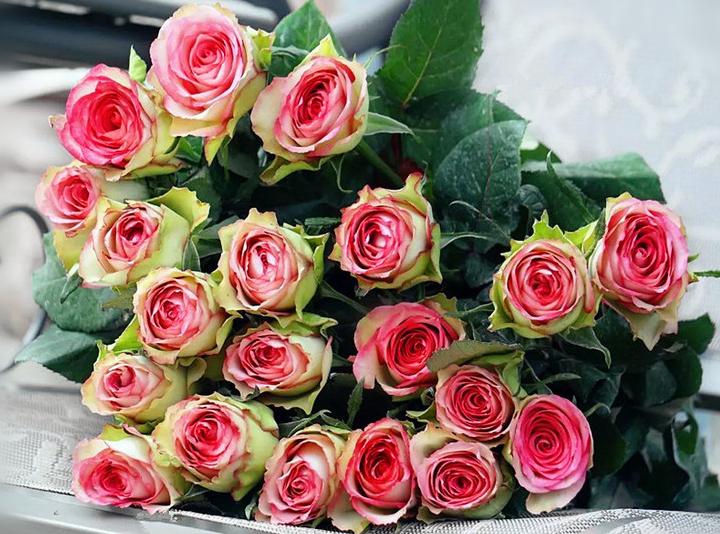 梦露玫瑰花语是什么