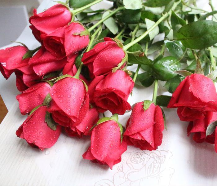 玫瑰花的花语和象征寓意