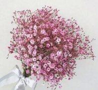 粉红色满天星花语,甘做配角的爱