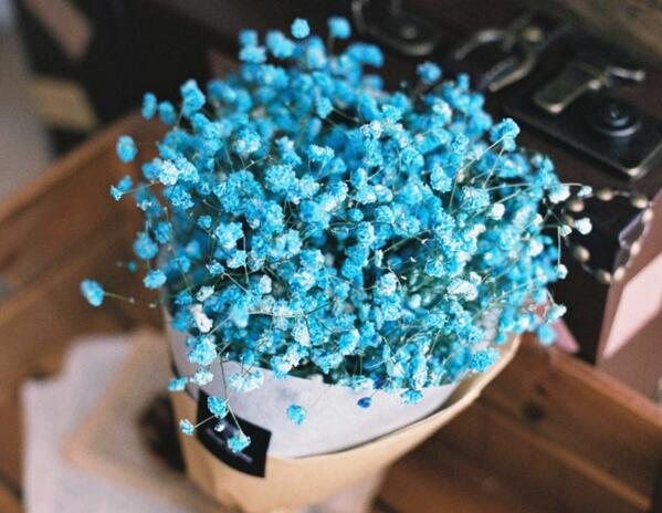 蓝色满天星花语,真心喜欢你